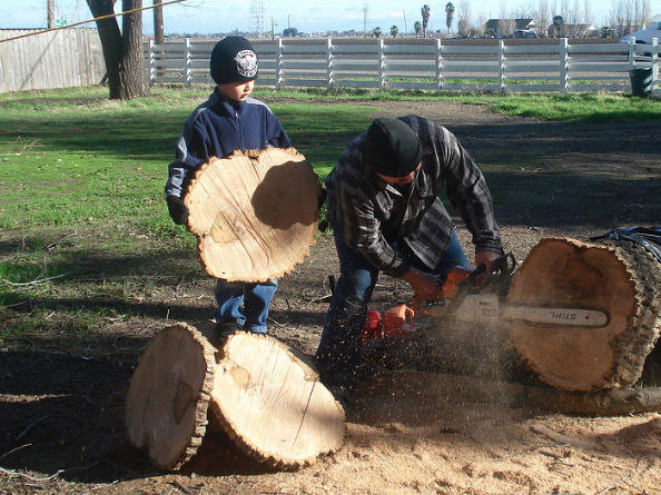 Cutting the tree into 3/4inch thick rounds
