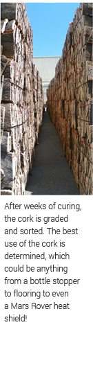 the cork is graded and sorted